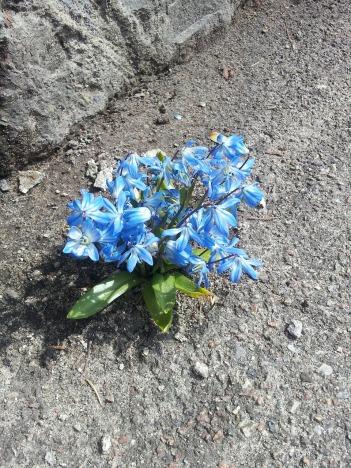 flowers-552598_1280.jpg